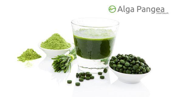 crowdfunding algenproduktion